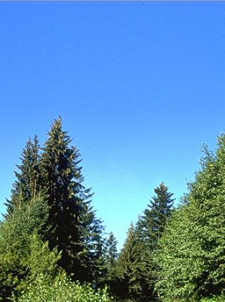 Forêt Scierie Chaumontet