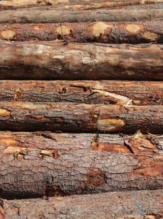 Les bois du pays